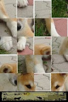 Screenshot of Dog Puzzle: Akita
