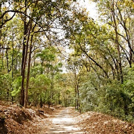 Jungle trail: Jim Corbett National Park by Debopam Banerjee - Landscapes Forests ( walking, holly, wood, bright, sadness, road, landscape, lane, alley, life, tree, cold, nature, autumn, trail, lifestyle, weather, dirt, lonely, isolated, park, loneliness, green, track, forest, leisure, steps, depression, outdoors, silence, branch, walk )