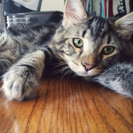 Selfie by Erica Dyroff - Animals - Cats Kittens