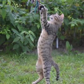 by Csilla Moll - Animals - Cats Playing
