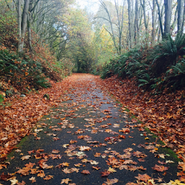 Autumn stroll  by Marie Ordona - Backgrounds Nature ( beautiful, trail, fall, leaves, hike,  )