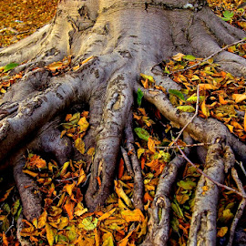 The Fall Out by Vern Tunnell - Nature Up Close Trees & Bushes ( fall, color, colorful, nature )