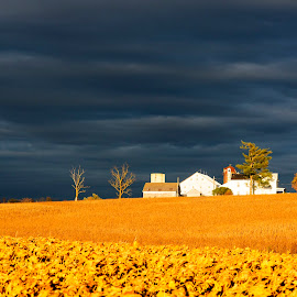 Fields of Gold by Tiffany Noles-Bailey - Landscapes Prairies, Meadows & Fields ( clouds, farm, contrast, sky, autumn, frederick, maryland, farmland, gold, storm, golden )
