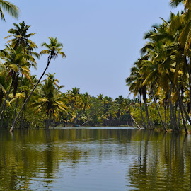 Kerala Backwaters by Avishek Naidu - Nature Up Close Trees & Bushes ( #backwaters, #coconut tree, #greenery, #kerala, #river )