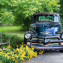 My new ride! by Becky Kempf - Transportation Automobiles ( 1954 truck, chevrolet, truck, vehicle )