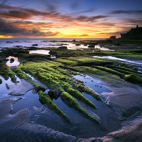 The Nature Claw by Eggy Sayoga - Landscapes Sunsets & Sunrises ( bali, indonesia, sunset, green, moss, beach )