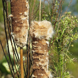 by Cindy Cooper Houser - Nature Up Close Other plants