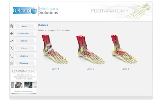 Screenshot of Foot Anatomy