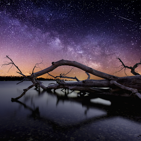 Chaos by Aaron Groen - Landscapes Starscapes ( water, pwcstars, waterscape, stars, meteor, night, milky way stars, south dakota, dead tree, starscape, lake alice, milky way )