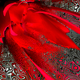 ROSE FLASH by Carmen Velcic - Digital Art Abstract ( abstract, red, pattern, roses, flowers, digital )