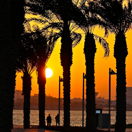 Sunset at MIA park by Nashira Usef - City,  Street & Park  City Parks ( palm, park, silhouette, sunset, doha, qatar, people, sun, golden )