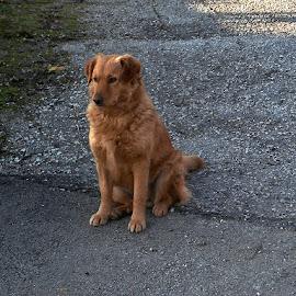 Čeka, sjedeći i šuteći, pa ti kao neznanac prođi!? by Katica Pecigoš-Kljuković - Animals - Dogs Portraits ( toplice 7 )
