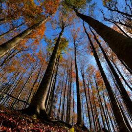Fall by Stanislav Horacek - Landscapes Forests