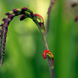 The budding life ... by Anupam Hatui - Nature Up Close Gardens & Produce (  )