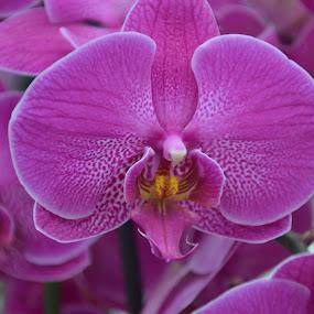 by Gobinathan Subramani - Flowers Single Flower