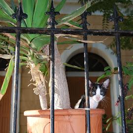 by Elena Glushak - Animals - Cats Kittens