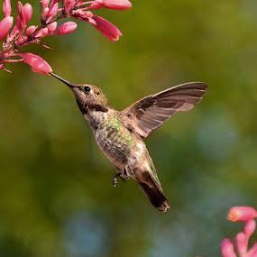 by Michelle Hunt - Animals Birds (  )