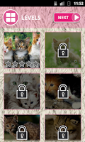 Screenshot of Cute Cats: Spot The Difference