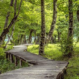 by Žana Popović - City,  Street & Park  City Parks ( forest,  )