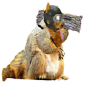 Squirrels Vs Clams icon