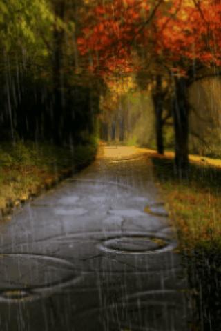 Rain In Autumn Live Wallpaper
