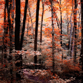 by Erin Nicholl - Landscapes Forests
