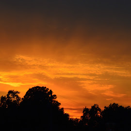 A Little More Gold by Lew Davis - Landscapes Sunsets & Sunrises ( clouds, orange, yellow, lew davis, skies, golden sunset, sky, nature, florida scenery, florida, sunset, sunsets, sundown, cloud, scenery, gold, evening, golden )