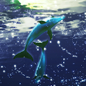 Dolphin Moonlight