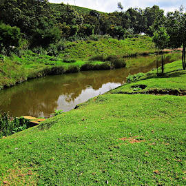 pond-park by Venkat Krish - Nature Up Close Water ( #pond #water #park #ooty #trees #grass )