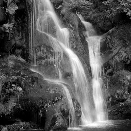 Posforth gill by Ineta Nachtmann - Nature Up Close Water ( water, pool, waterscape, waterfall, woods )