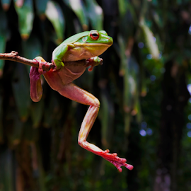by Ubayoedin As Syam - Animals Amphibians