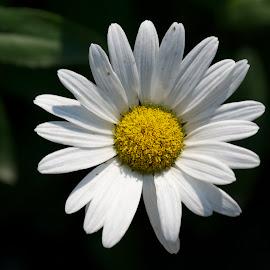 by Claudel Lamoureux-Duquette - Novices Only Flowers & Plants ( montreal, flowergraphy, simple, botanical garden, garden, flower )