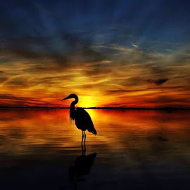 Blue Heron Sentry by Rick Danuser - Landscapes Sunsets & Sunrises