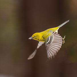 You Decide by Roy Walter - Animals Birds ( flight, animals, wildlife, feathers, birds )