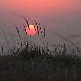 sunset by Edith Polverini - Landscapes Sunsets & Sunrises ( grassland, grass, sunset, sun, red sun )