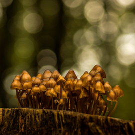 Fungi army by Peter Samuelsson - Nature Up Close Mushrooms & Fungi