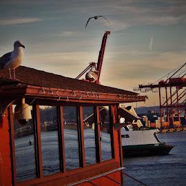 SEATTLE SCENE  by Lavonne Ripley - City,  Street & Park  Vistas