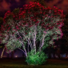 Burning tree by Luka Stipinović - Nature Up Close Trees & Bushes ( tree, croatia, split, night, nikon, night shot )