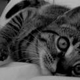 by Nikki Simpson - Animals - Cats Kittens