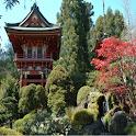 Tea Garden Wallpapers icon