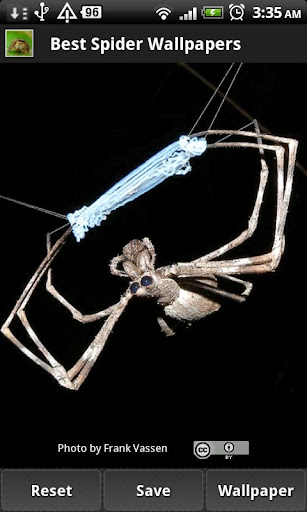 Best Spider Wallpapers