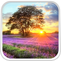 Perfect Sunset Live Wallpaper APK for Bluestacks