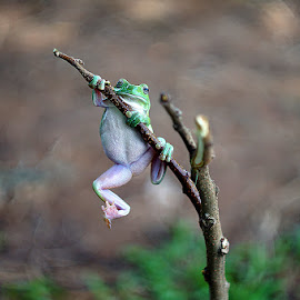 A Funny Frog by Rons Njo - Animals Other