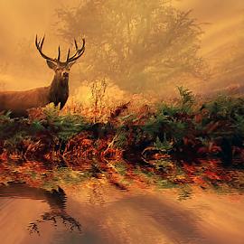 by Laimonas Šepetys - Digital Art Animals