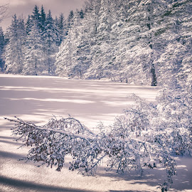 Silence by Shawn Hudson - Landscapes Weather ( srhpimaging, winter, nature, snow, trees, cloud, pond, sun, shawn hudson )