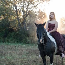 by Lisa Voshell - Animals Horses