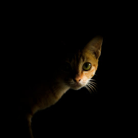Preety Kitty by Yulian Prasetya - Animals - Cats Portraits ( #cat #awesome #cool )