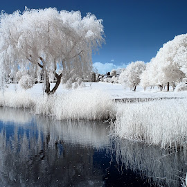Lake infrared by Mark Bond - Landscapes Prairies, Meadows & Fields (  )