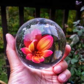 by Dipali S - Instagram & Mobile Android ( red, nature, artistic, sphere, flower )