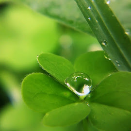 Dew by YooDee Gendhoets - Nature Up Close Water